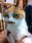 2011年秋 愛猫ミミ IMG_4350.jpg