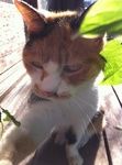 2011年秋 愛猫ミミ IMG_4536.jpg