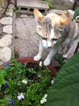 猫 ユリ IMG_9752.jpg