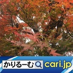 35_momiji191215w500x500.jpg
