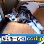 28_cat200707.jpg